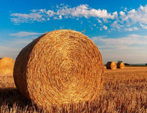 Traduire l'agriculture