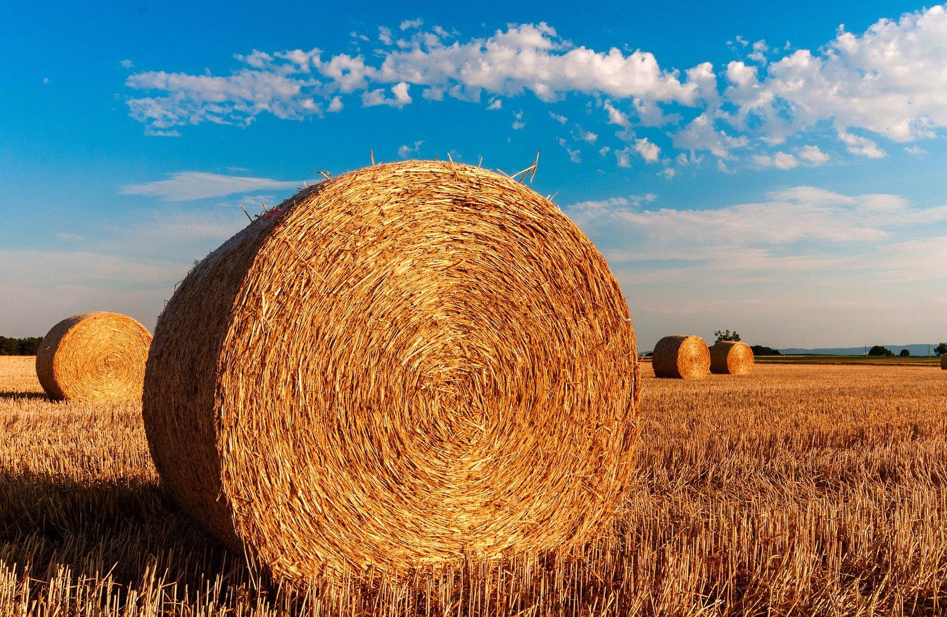 Les solutions de Traduction dans le domaine de l'Agriculture avec Eu Coordination, agence de Traduction et d'Interprétation.